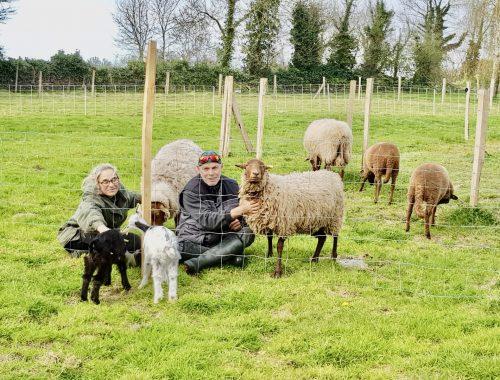 mouton au manoir de projou